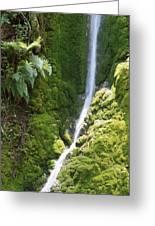 Ventana Wilderness Greeting Card
