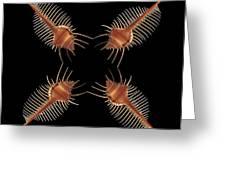 Venus Comb Geometric Greeting Card