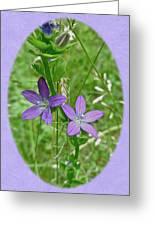 Venus Looking Glass - Triodanis Perfoliata Greeting Card