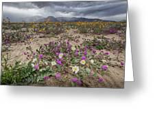 Verbena And Primrose Greeting Card