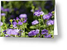 Verbena Greeting Card by Stefano Piccini