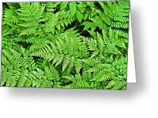 Verdant Ferns Greeting Card