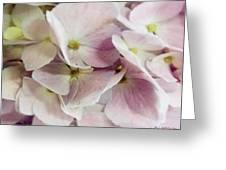 Verging On Violet Greeting Card