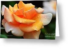 Variegated Yellow Rose Greeting Card