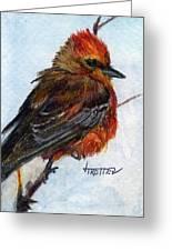 Vermillion Flycatcher Greeting Card