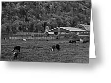 Vermont Farm With Cows Black And White Greeting Card