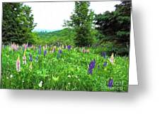 Vermont Lupine Greeting Card