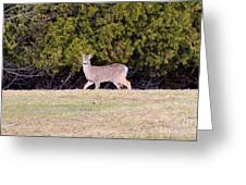 Vermont White-tailed Deer  Greeting Card