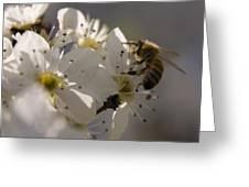 Vernal Equinox I Greeting Card