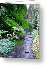 Vernon Creek Greeting Card