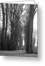 Versailles Trees Greeting Card