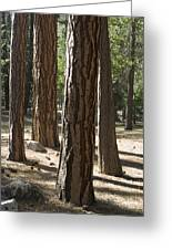 Vertical Of A Stand Of Ponderosa Pine Greeting Card