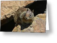 Very Cute Face Of A Wild Squirrel In California Greeting Card