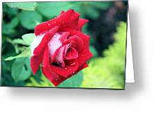 Very Dewy Rose Greeting Card