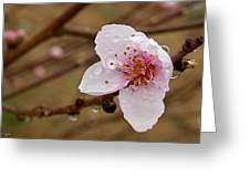 Very Early Peach Blooms Greeting Card