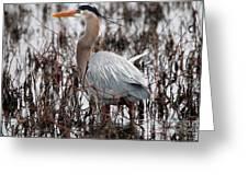 Very Handsome Heron  2845 Greeting Card