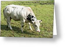 Very Muscled Cow In Green Field Greeting Card
