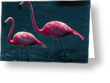 Very Pink Flamingos Greeting Card
