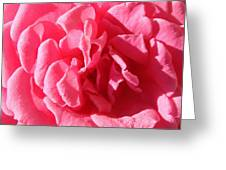 Very Pink Mini Greeting Card