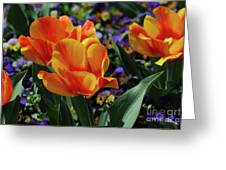 Very Pretty Colorful Yellow And Red Striped Tulip Greeting Card
