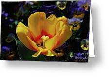 Very Pretty Flowering Yellow Tulip With A Red Center Greeting Card