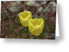 Very Pretty Pair Of Flowering Yellow Tulip Blossoms Greeting Card