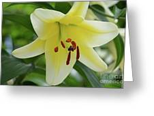 Very Pretty Single Blooming Yellow Daylily Flower Greeting Card