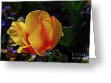 Very Pretty Yellow And Red Tulip Flower Blossom Greeting Card