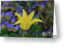 Very Pretty Yellow Tulip With Spikey Petals Greeting Card