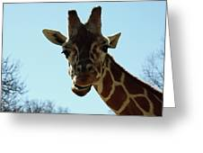 Very Tall Giraffe Greeting Card
