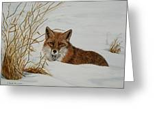 Vexed Vixen - Red Fox Greeting Card
