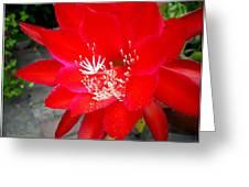Vibrant Cacti Greeting Card