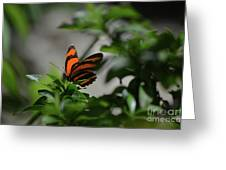 Vibrant Colors To A Orange Oak Tiger Butterfly Greeting Card