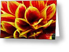Vibrant Dahlia Petals Greeting Card