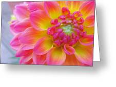 Vibrant Dahlia Greeting Card