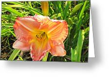 Vibrant Daylilly Greeting Card