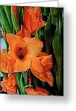 Vibrant Gladiolus Greeting Card