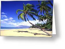 Vibrant Green Palms Greeting Card