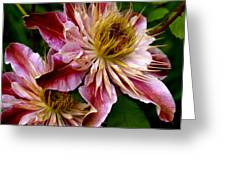 Vibrant Lillies Greeting Card
