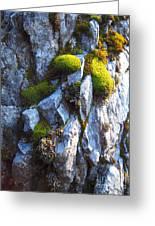 Vibrant Moss Greeting Card