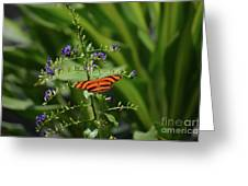 Vibrant Oak Tiger Butterfly Surrounded By Blue Flowers Greeting Card