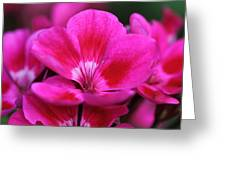 Vibrant Pink Flowers Greeting Card