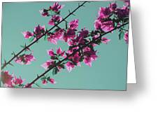 Vibrant Pink Flowers Bloom Floral Background Greeting Card