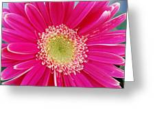 Vibrant Pink Gerber Daisy Greeting Card