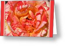 Vibrant Two Toned Rose With Design Greeting Card
