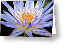 Vibrant White Water Lily Greeting Card