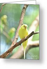 Vibrant Yellow Budgie Parakeet In The Summer Greeting Card