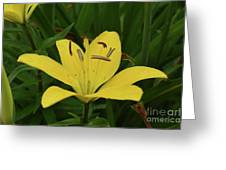 Vibrant Yellow Lily Thriving In The Spring Greeting Card