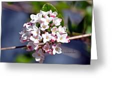 Viburnum Bloom Greeting Card