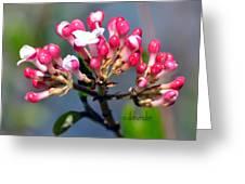 Viburnum Greeting Card